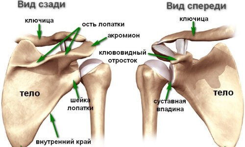Боли в плечевом суставе при движении