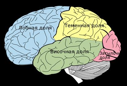 Нарушение высших мозговых функций