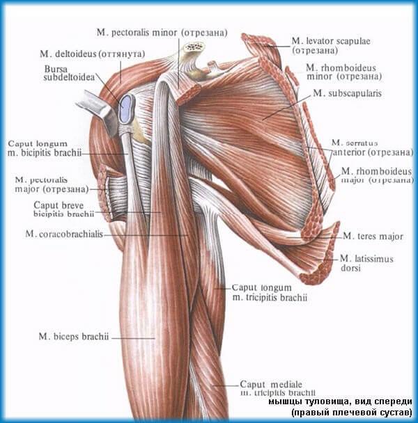 Mână dureroasă, chiar sub umăr. Efect mecanic asupra articulației