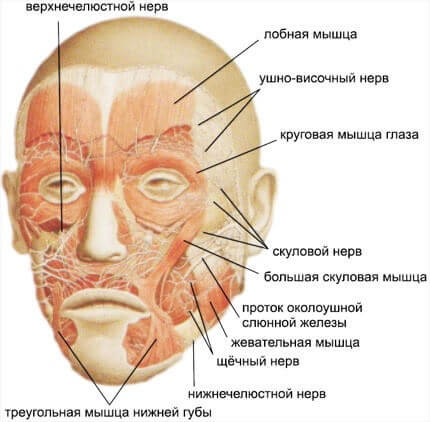 Болевая мышечно-фасциальная дисфункция