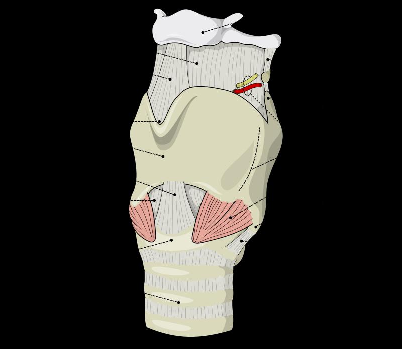 Невралгия верхнего гортанного нерва