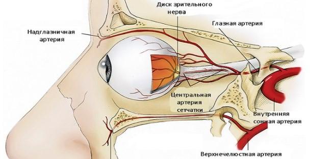 Трансорбитальный просмотр глазниц - кровоток глаз и тканей глазниц