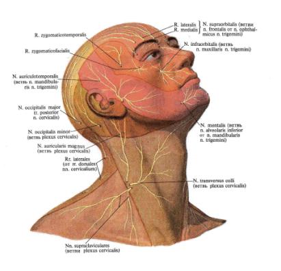 Нервы головы