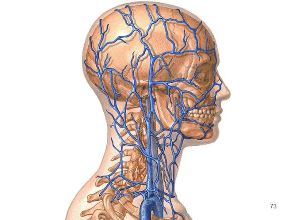 Диагностика и лечение мигрени
