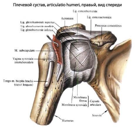 Як уникнути операції на колінному суглобі