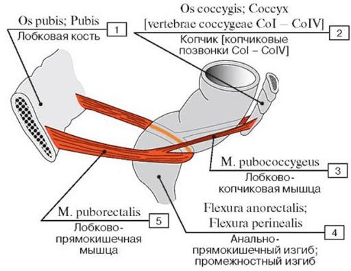 Біль в промежині: причини, діагностика та лікування в Києві